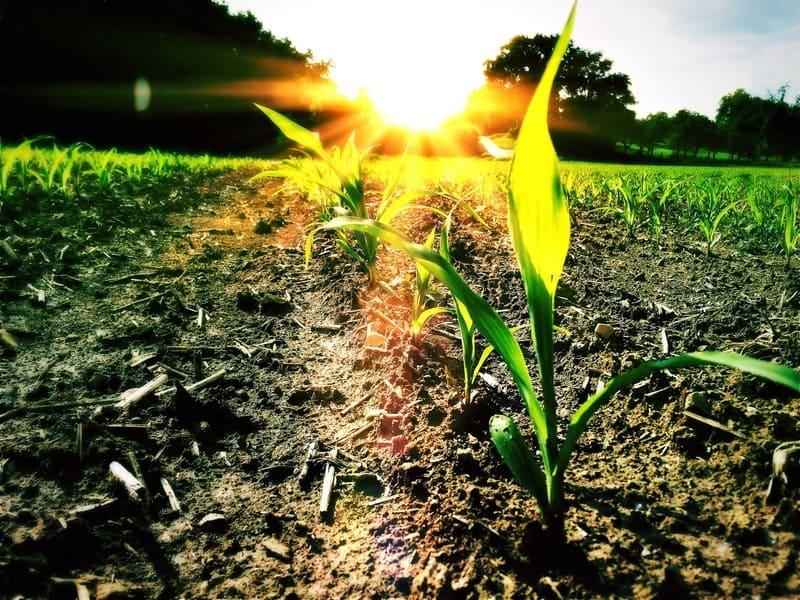 productos agrarios quimicos