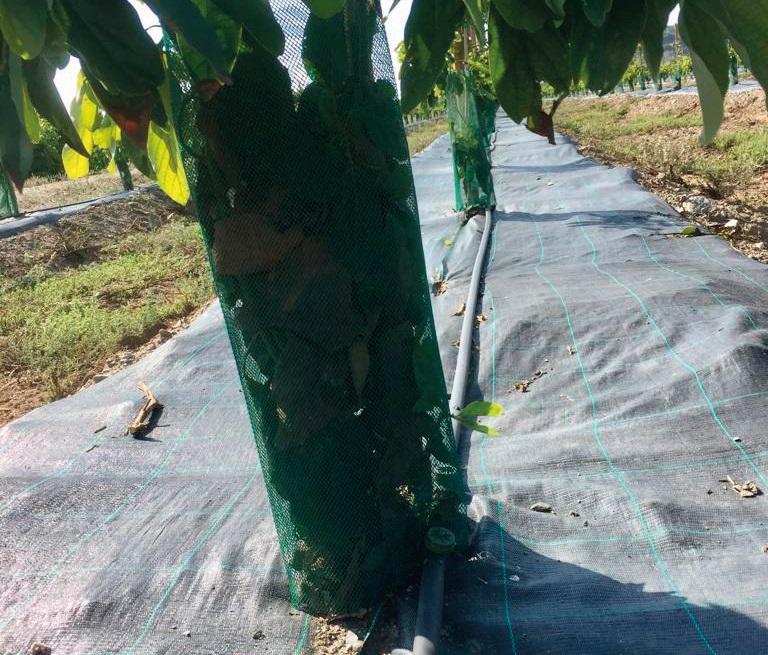 tratamiento de agua cultivo