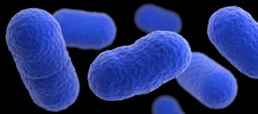 imagen bacteria listeria